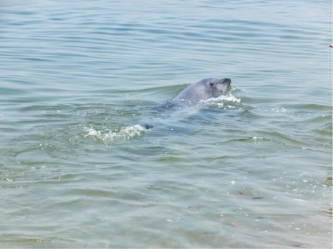 suma-dolphin-coast12.jpg