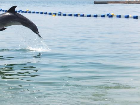 suma-dolphin-coast13.jpg