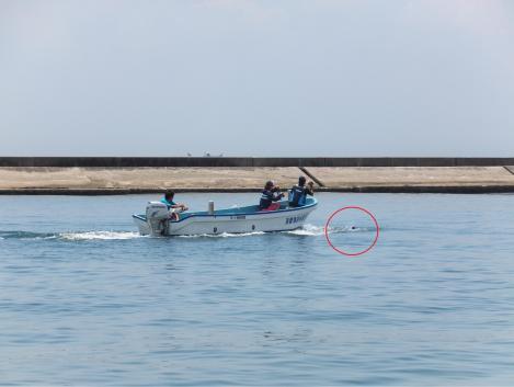 suma-dolphin-coast14.jpg
