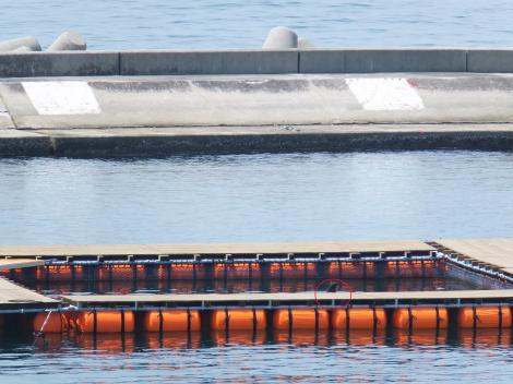 suma-dolphin-coast5.jpg