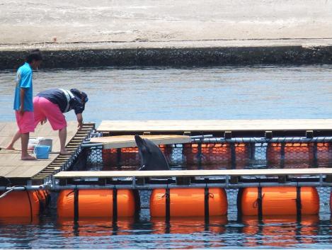 suma-dolphin-coast8.jpg
