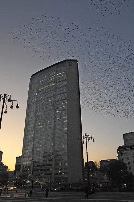uccelli_pirellone.jpg