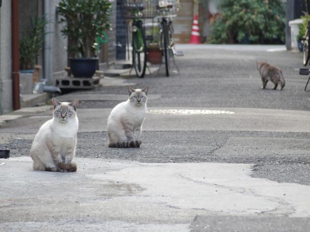 猫6,7,8