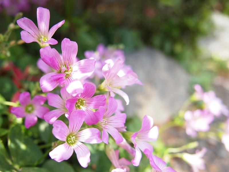 小さい花がわしゃわしゃ~