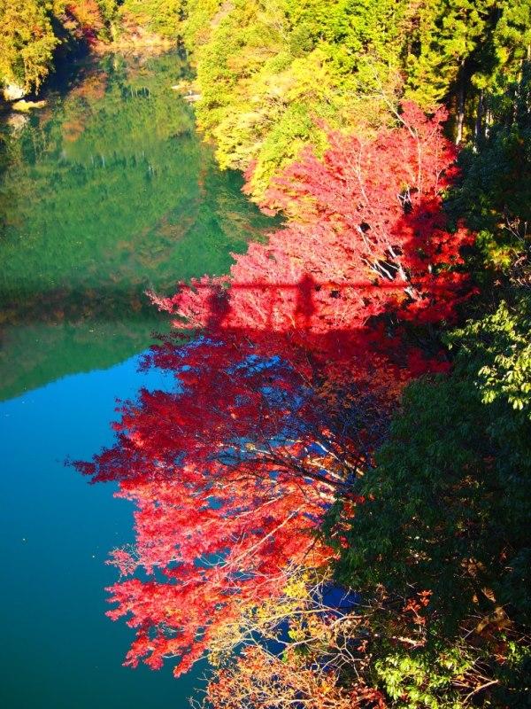 水面鏡と紅葉