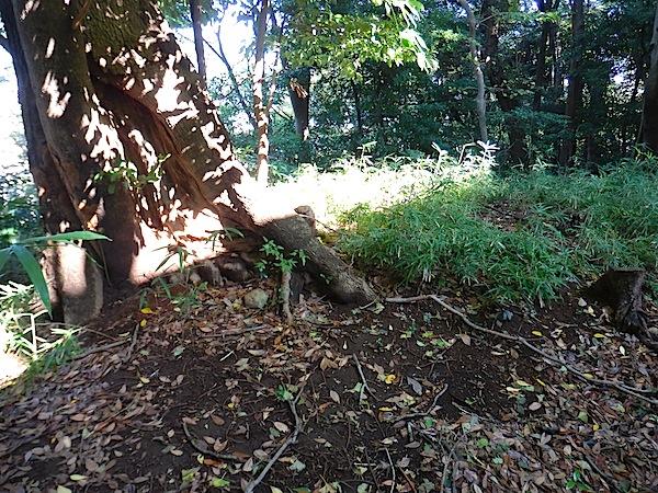 「板橋区遺跡番号159番 無名塚」