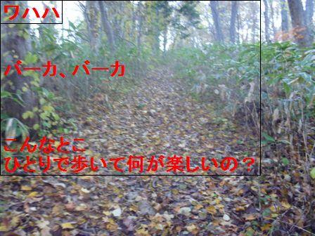 P1040778.jpg
