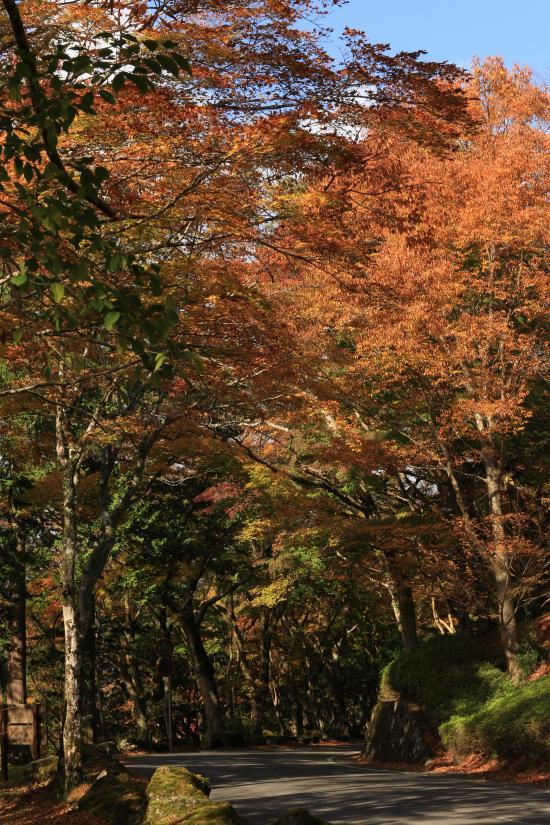 箱根+163_convert_20141124030750