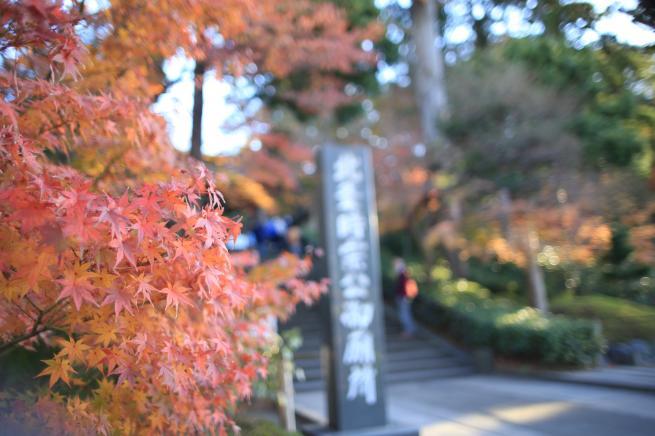 鎌倉紅葉と江ノ電+001_convert_20141210020008