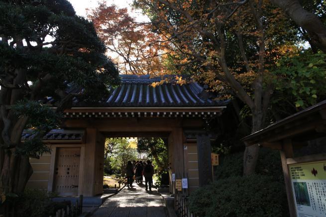 鎌倉紅葉と江ノ電+119_convert_20141210031017