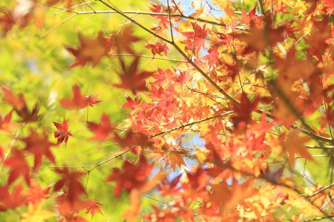 鎌倉紅葉と江ノ電+105_convert_20141210030058