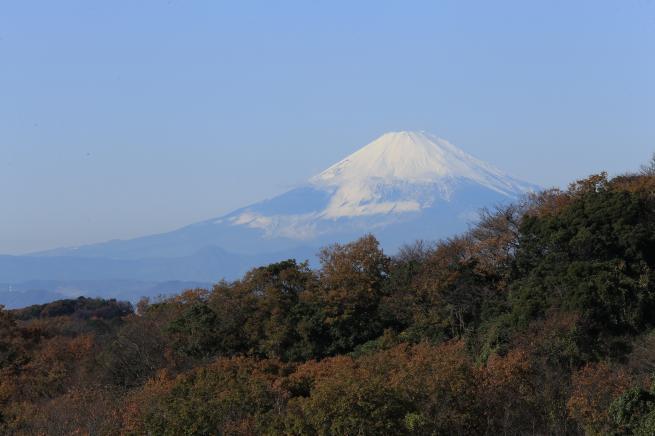 鎌倉紅葉と江ノ電+093_convert_20141210024903