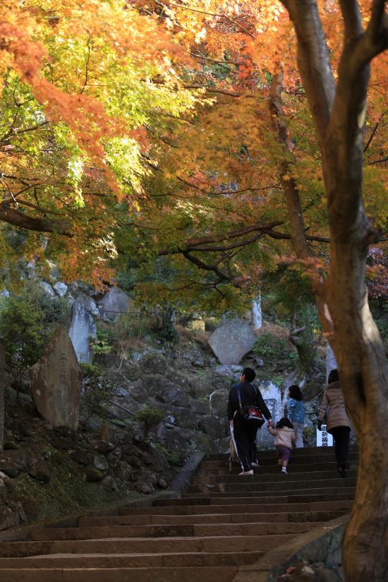 鎌倉紅葉と江ノ電+083_convert_20141210023700