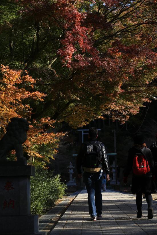 鎌倉紅葉と江ノ電+078_convert_20141210023332