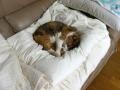 愛猫:2013.11.01