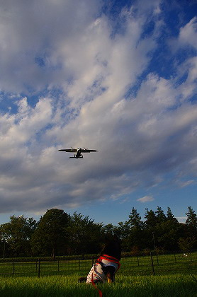 さらに飛行機とはな