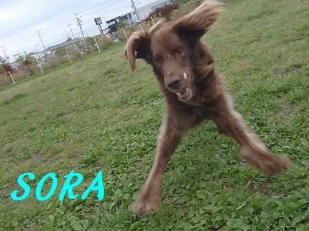 SORA19APR13 142