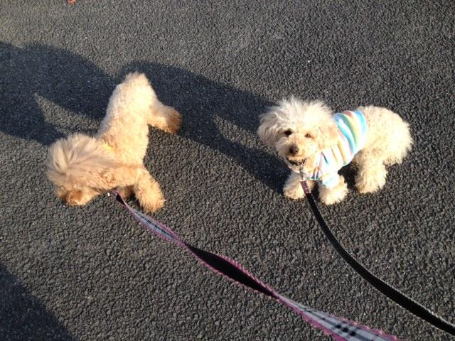 写真 朝の散歩