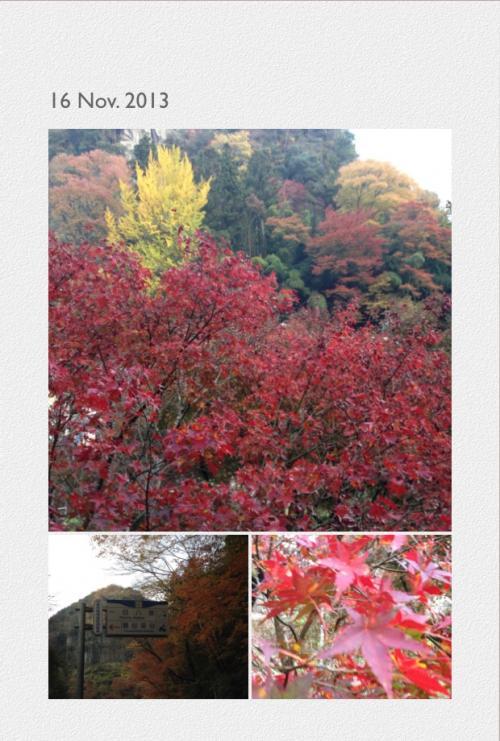写真+紅葉5_convert_20131117204836