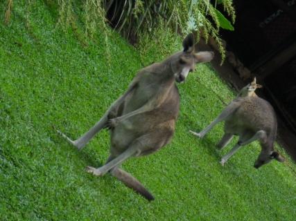 濠太剌利(オーストラリア)研修旅行記その1 長い飛行旅と軽い時差ぼけ