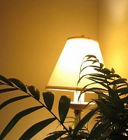 ★200観葉植物と照明(トリミング)