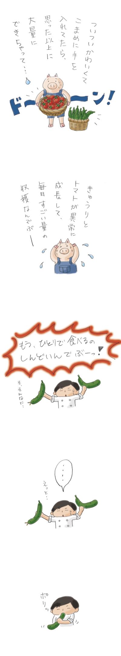 ぶーさんの夏野菜2