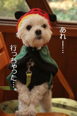 IMG_5000_201401152142564e1.jpg
