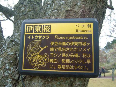 DSCN0196 桜の里