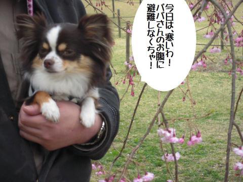 DSCN0193   桜の里