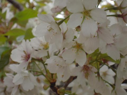 DSCN0200 桜の里
