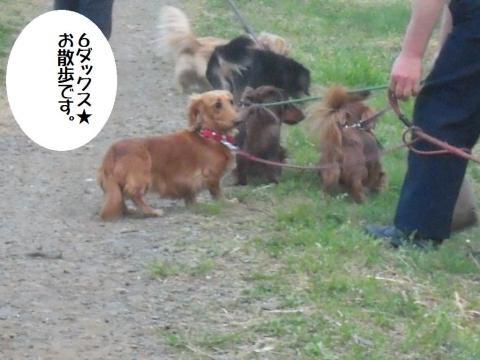 DSCN9691   春の散歩