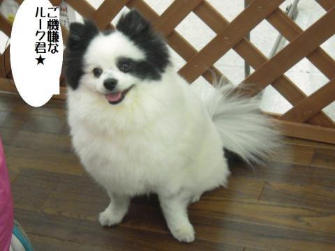 DSCN9857   6ワン