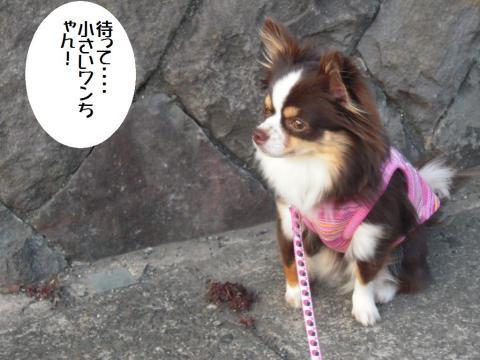 DSCN9936   お散歩