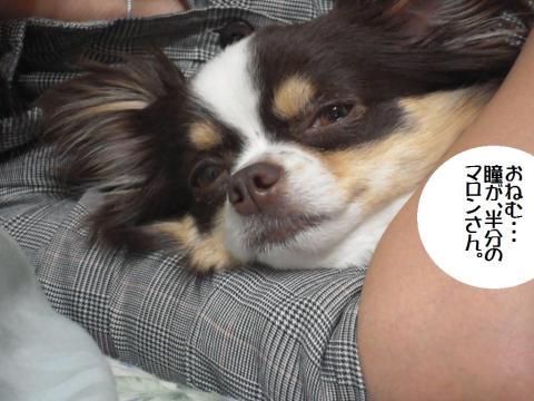 DSCN9944  愛犬