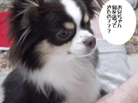 DSCN9935 神戸