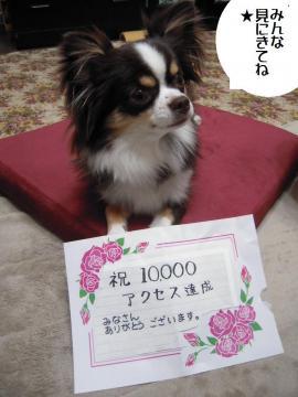 DSCN0037 祝1万