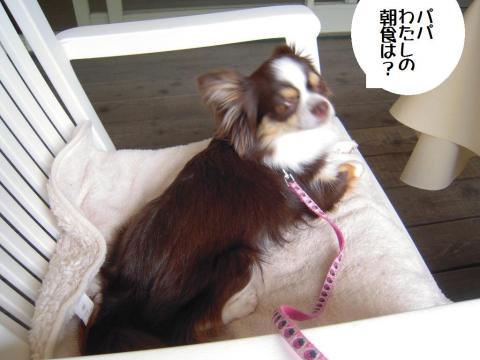 DSCN9957 軽井沢