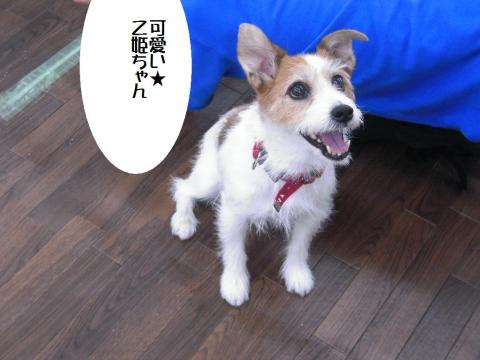 DSCN0059 ワン友乙姫
