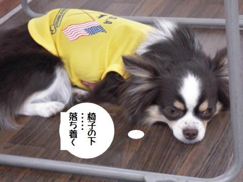 DSCN0057 ワン友乙姫