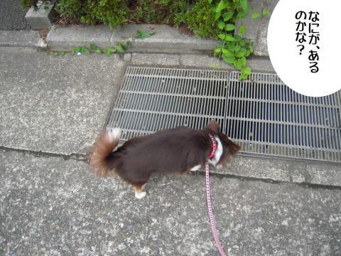 DSCN9905 散歩9
