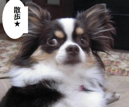 DSCN0004 秋散歩