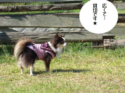 DSCN0190  沼田