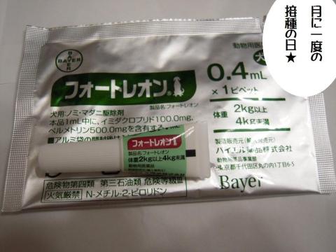 DSCN0019 ノミ