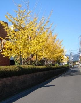 DSCN9928 散歩T