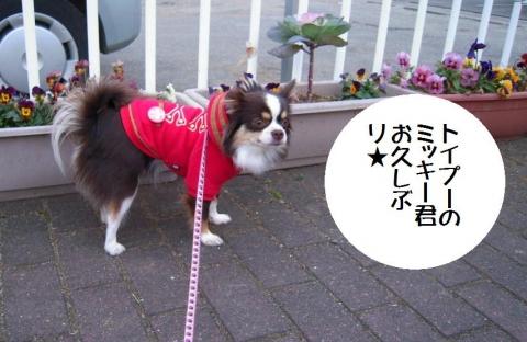 DSCN0015 お散歩