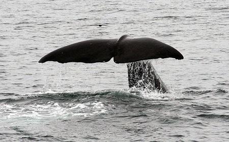 クジラの寝相は??