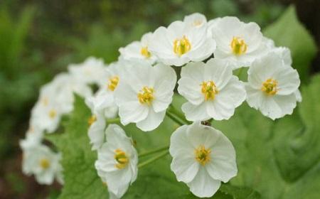 普通の白い花の感じだけど~