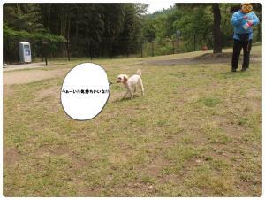 DSCF0528_convert_20130515110750.jpg