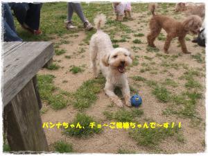 DSCF0543_convert_20130516103207.jpg