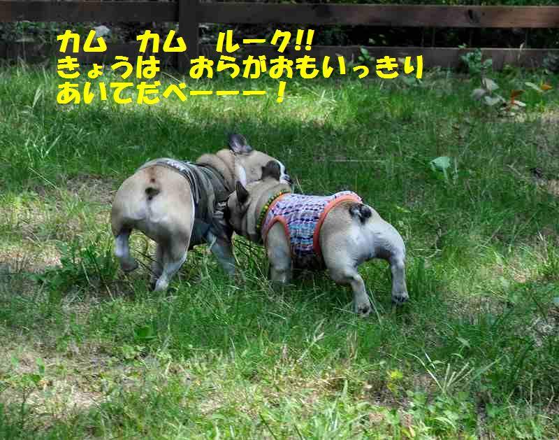 012_201309241408011d8.jpg
